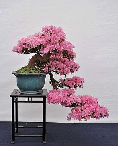 entretenir un azalee d interieur jardin japonais quelles plantes et arbres pour un jardin zen