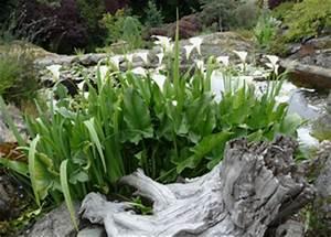 Plante Pour Bassin Extérieur : plantes aquatiques incontournables pour le bassin ~ Premium-room.com Idées de Décoration