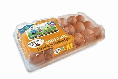 Eggs Organic Medium Pack Valley Egg 18pk