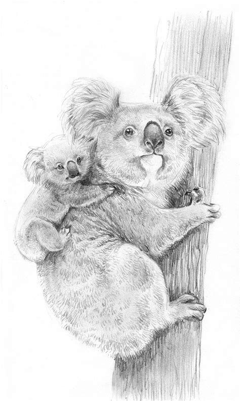 coloriages  imprimer koala numero