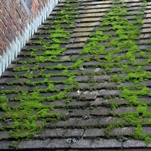 mousse sur toiture tuiles entreprise de couverture zinguerie demoussage tuiles