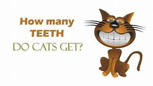 How Many Teeth Do Cats Get