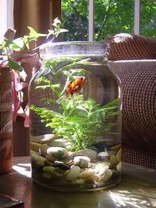 Les Aquariums  Si On Les Aime  Peuvent Dynamiser La Zone