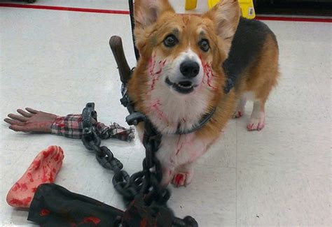 halloween pet costumes  badly wrong  field