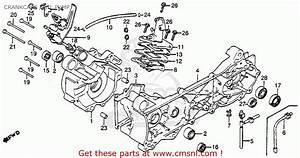 Honda Nu50 Parts Diagram  Honda  Auto Wiring Diagram