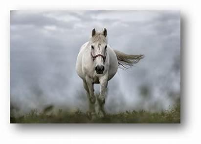 Horse Chatham Health County Clinic Robbins Ashley