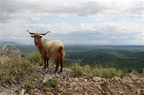 Travel to Animals in Montenegro - Picture Gallery, Hotels