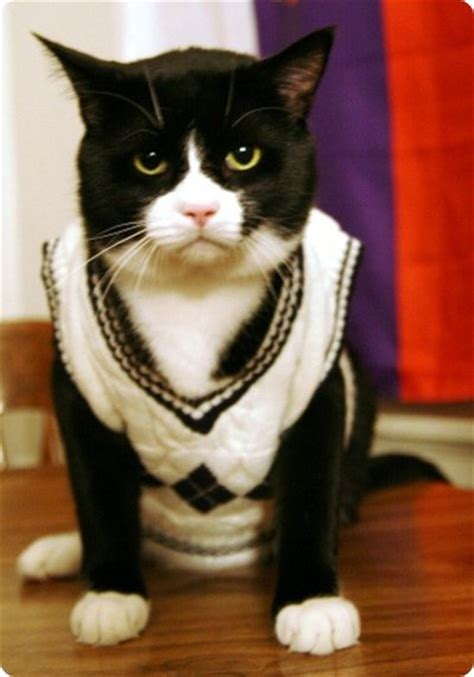cat sweaters for cats the top 28 cat sweater designs photo gallery
