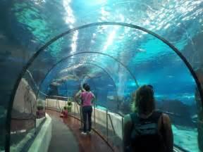 les plus beaux aquariums de