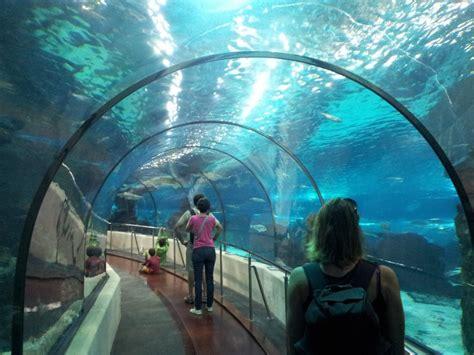 aquarium boulogne sur mer tarif les plus beaux aquariums de