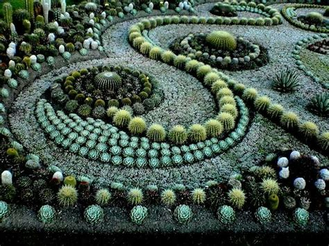 succulent mandala and the garden