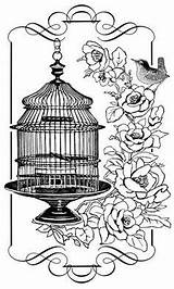 Cage Bird Coloring Pages Birds Adult Birdcage Sheets Stamps Clip Stamp Colouring Printable Glass Dibujos Transferencias Books Roses Blanco Negro sketch template