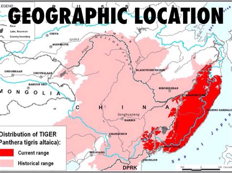 What Is Geographical Location by Siberean Tiger By Soccerviper9