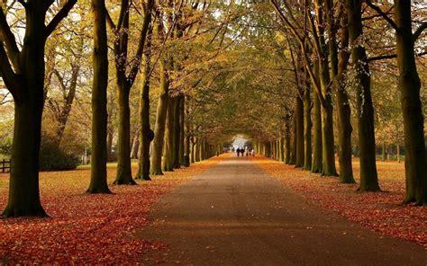 autumn avenue walk  wallpapers autumn avenue walk