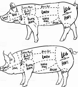 Pork Cuts Diagram Outline And Butchery Set Hand Drawn Pig