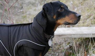 regenmantel für hunde mit bauchschutz hundemantel und hundebekleidung g 252 nstig kaufen