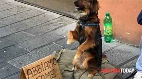 legge sull ingresso dei cani nei luoghi pubblici cani nei luoghi pubblici legge il regolamento