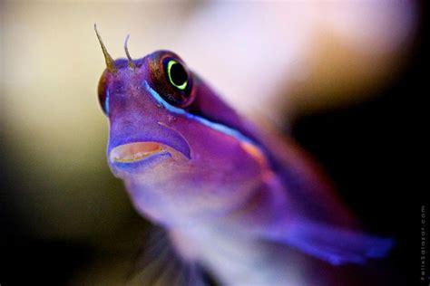 macro underwater photography  reef dwellers  felix salazar