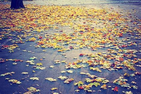 Autumn Tree and Leaves - Stock Photo , #AFFILIATE, #Tree, #Autumn, #Leaves, #Photo #AD | Autumn ...