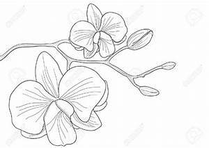 Orchid clipart line drawing - Pencil and in color orchid ...