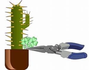 Comment Entretenir Un Cactus : comment d sherber un cactus jardinier paresseux ~ Nature-et-papiers.com Idées de Décoration