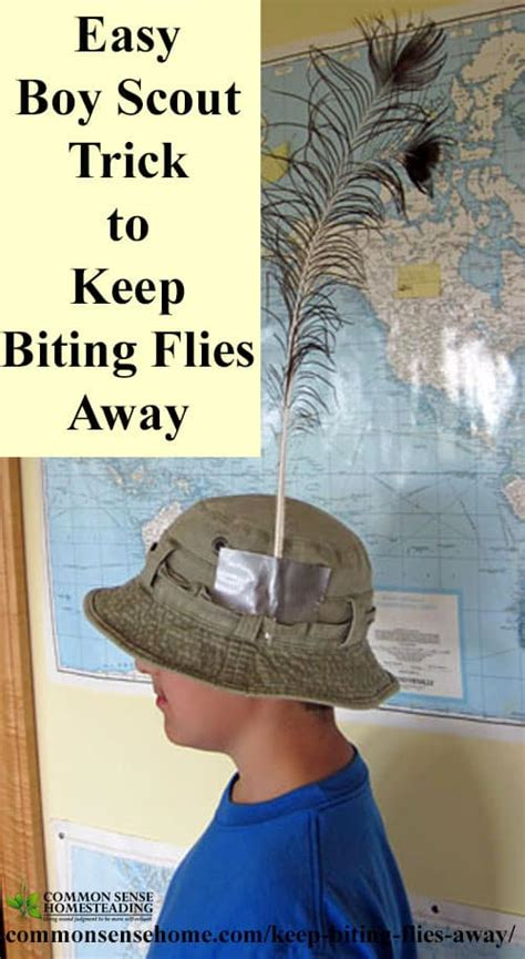 what is to keep flies away deer fly control and deterrent tips to keep biting flies away