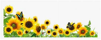 Border Sunflowers Butterfly Transparent Flowers Ftestickers Pngitem