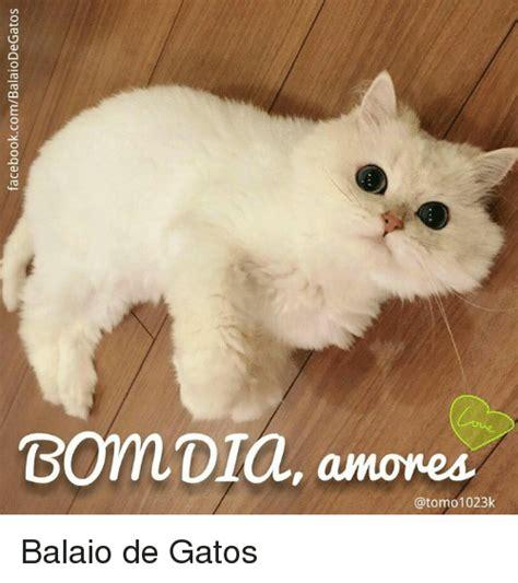 Memes De Gatos - 25 best memes about memes memes meme generator