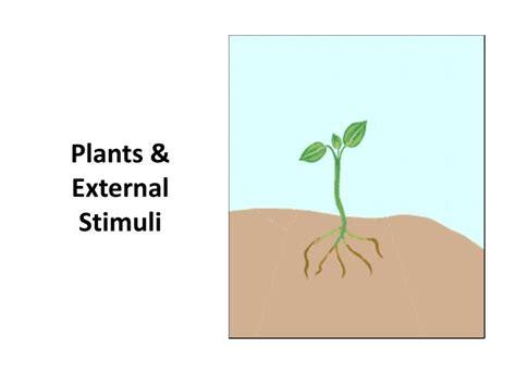 PPT - Plants & External Stimuli PowerPoint Presentation, free download - ID:2174096