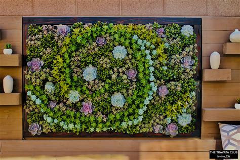 Vertical Garden Solutions by Succulent Living Wall Truevert 174 Vertical Garden