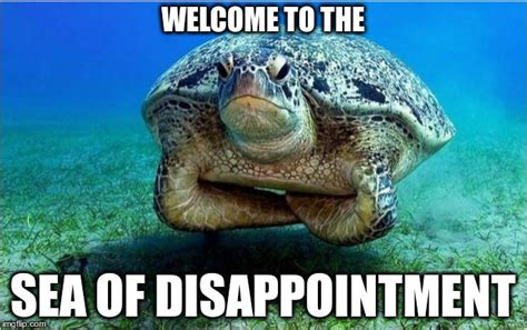 Disappointed Meme - disappointed turtle imgflip