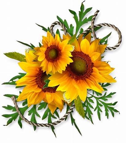 Sunflowers Clipart Sunflower Clip Autumn Bouquet Digital