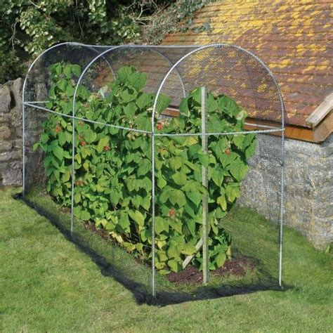 long domed roof fruit cage      raspberry