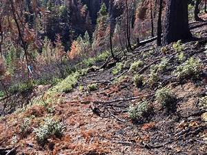 Re  One More Day On The Madera Sugar Pine Grades