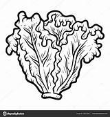Lechuga Verduras Alface sketch template