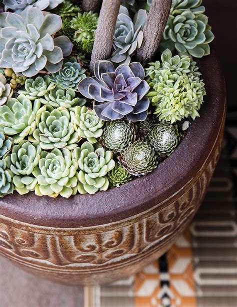 how to plant succulents in containers container designs with succulent plants sunset