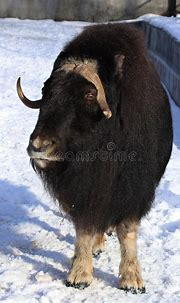Zoo Animals, Moscow, Russia Stock Image - Image of snow ...
