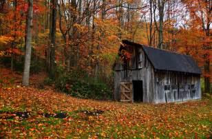 Pumpkin House Wv Dates by Bald Eagle Autumn L Automne M 249 A Thu