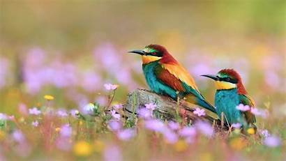 Birds Flowers Colorful Wallpapers Bird Flower Nature