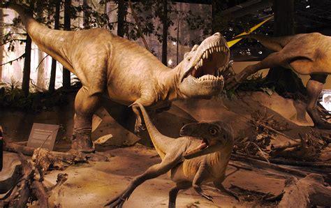 albertosaurus fossileracom