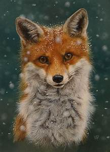 3444 best FOX LOVE images on Pinterest | Fox, Foxes and ...