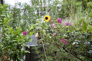 Garten Im September : der yok garten im september ye olde kitchen food und gartenblog ~ Whattoseeinmadrid.com Haus und Dekorationen