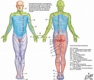 dermatomes - Google Search | Med | Pinterest | Google ...