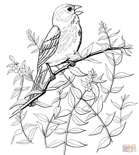 Kleurplaat Nachtegaal by Song Sparrow Coloring Page Free Printable Coloring Pages