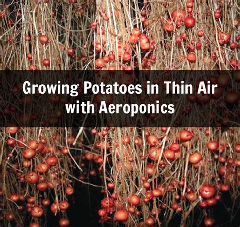 growing potatoes  thin air  aeroponics  grid world