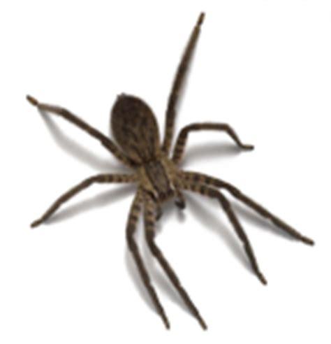 signification araignee dans une maison r 234 ver d araign 233 e en islam