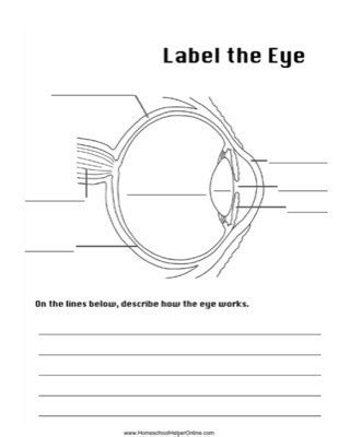 Eye Diagram To Label Kifd by Label The Eye Worksheet Homeschool Helper