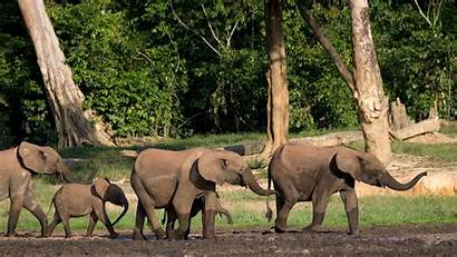 Republic Central African Africa Sangha Dzanga National