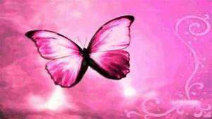 Pink Butterfly Backgrounds ·①