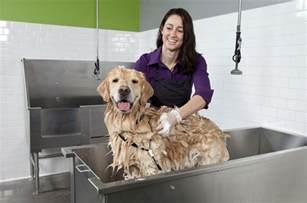 Self Washing Dog Wash